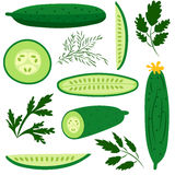 Cucumbers. Set of ripe cucumbers made in flat style. Great for design of healthy lifestyle or diet. Single cucumber, half a cucumber, a slice of cucumber and Royalty Free Stock Photos