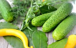 Cucumbers and spices Stock Photo