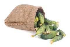 Cucumbers spill out of the bag isolated on white Royalty Free Stock Images