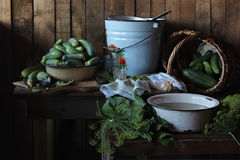Cucumbers. Still life with a crop of cucumbers Stock Photos