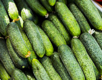 Cucumbers. A cucumbers with tails background Stock Photos