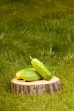 Cucumbers on a tree stump Stock Photo