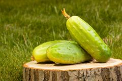 Cucumbers on a tree stump Royalty Free Stock Images