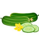 Cucumbers Royalty Free Stock Photos