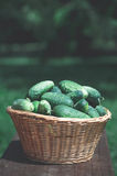 Cucumbers in the wicker basket Stock Photos