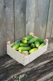 Cucumbers in wooden box. Fresh eco cucumbers in wooden box in the garden Stock Photo