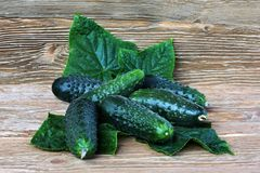 Cucumbers Stock Image