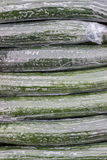 Cucumbers Wrapped in Plastic Background Stock Images