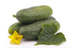 Cucumbers with yellow flower. Cucumbers with yellow flower on a white background Stock Photography