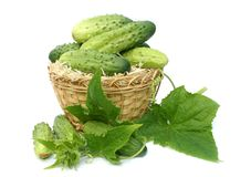 Cucumbers in a yellow wum basket. Ripe green cucumbers in a yellow wum basket Stock Photo
