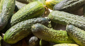 Cucumis sativus background filled with cucumbers Stock Photo