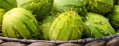 Cucumisanguria, cackrey, kastanjebruine komkommer, het Westen Indische augurk en het Westen Indische pompoen Deco-fruit gele en g royalty-vrije stock afbeeldingen
