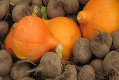 Cucurbita and beetroot Stock Image