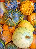 Cucurbita decoration background and wallpapers in top high quality prints stock images