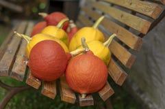 Cucurbita pepo i cucurbita maksimumy na drewnianej ławce, dojrzewający warzywa, jesieni żniwo obraz royalty free