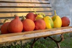 Cucurbita pepo i cucurbita maksimumy na drewnianej ławce, dojrzewający warzywa, jesieni żniwo zdjęcie royalty free