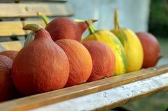 Cucurbita pepo i cucurbita maksimumy na drewnianej ławce, dojrzewający warzywa, jesieni żniwo fotografia stock