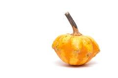 Cucurbita pepo in orange Royalty Free Stock Photos