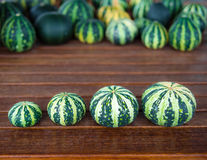 Cucurbita pepo still life green pumkins in a row. Still life with green pumpkins cucurbita pepo arranged in a row from small to big with blured pumpkins in a Royalty Free Stock Photography