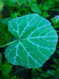 The Cucurbitaceae. Also called cucurbits and the gourd family Stock Photo