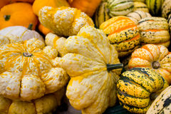 Cucurbitaceae Pumpkins Stock Images