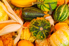 Cucurbits on sale in a French market. Various Cucurbits on sale in a French market in Dijon, Burgundy, France Royalty Free Stock Photos