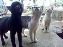 Cudów koty Zdjęcie Royalty Free