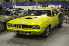 Cuda Royalty Free Stock Image