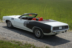 Cuda Royalty Free Stock Photo