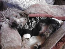 cuddle Imagens de Stock