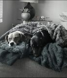 Cuddle pączki Fotografia Stock