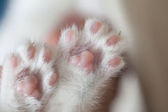 Cuddle paw pads Stock Images