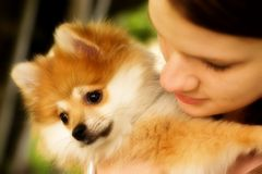 Cuddle Puppy. Close-up of a teen girl cuddling her Pomeranian puppy royalty free stock photography