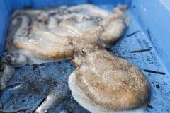 Grote Inktvissen die op de vissenveiling wachten Stock Fotografie