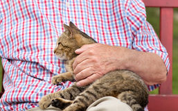 Cuddling cat Royalty Free Stock Photos