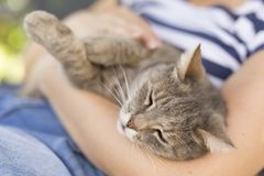 Cuddling the cat Royalty Free Stock Photos