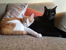 Cuddling Cats on sofa stock image