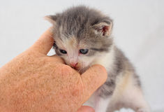 Cuddling a kitten Stock Photos