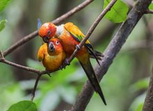 Cuddling Parrots