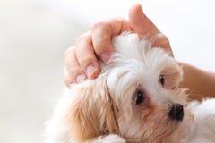 Cuddling pet dog Stock Photos