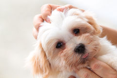 Cuddling pet dog Stock Photos