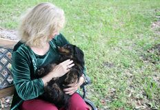 Cuddly Dachshund in the Park royalty free stock image