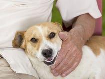 Cuddly dog. Cute dog enjoying cuddling of his elder owner Stock Photo
