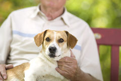 Cuddly dog. Cute dog enjoying cuddling of his elder owner Stock Images