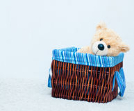 Cuddly toy bear in the webbed basket Royalty Free Stock Photography
