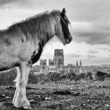 Cuddy обозревает историческую столицу добычи угля города Дарема Стоковые Фотографии RF
