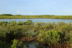 Cudjoe Key wetlands Stock Photos