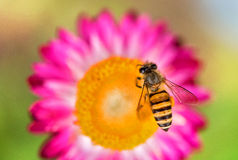 Cudowna fotografia piękna pszczoła i kwiaty słoneczny dzień obraz stock