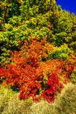 Cudowna jesień w lesie Zdjęcie Stock
