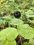 Cudowna kwiat tapeta obraz stock